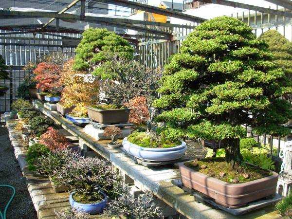 South Carolina Upstate Bonsai Study Group Greenville Sc Lawn Garden